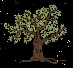 albero-de-capua